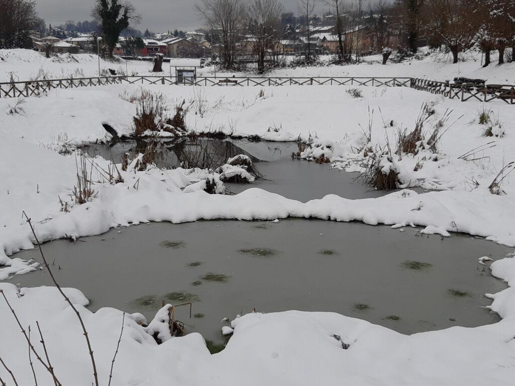 Foto con neve fitodepuratore