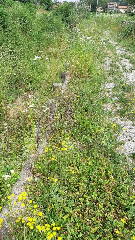 Argine del torrente Roggia ricoperto dalle piante