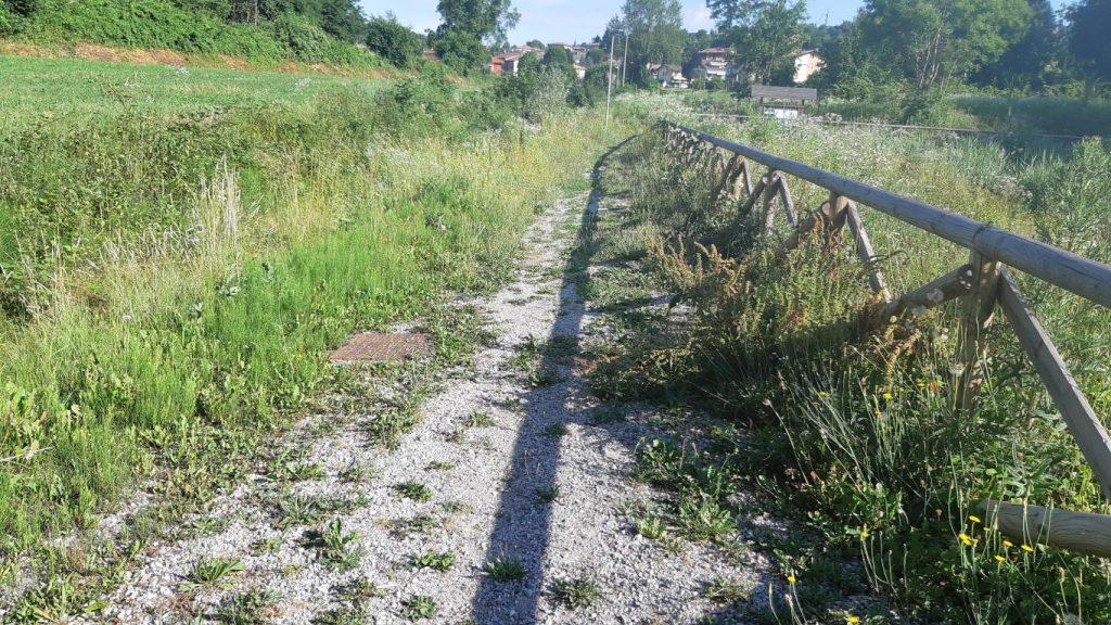 Sentiero con piante (fitodepuratore)