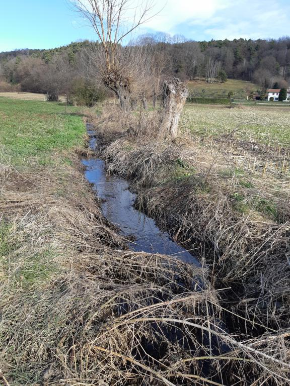 Foto del torrente