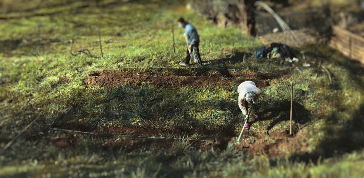 Vigna Leo: lavori in corso - preparazione del terreno